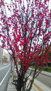 相模原・町田・八王子で自然素材の健康住宅を提供する相陽建設の近くで咲く花