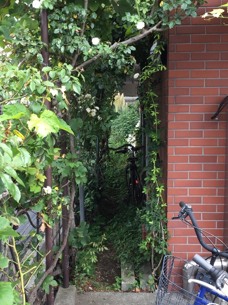 相模原・町田・八王子で自然素材の健康住宅を提供する相陽建設、本社周りを除草しました