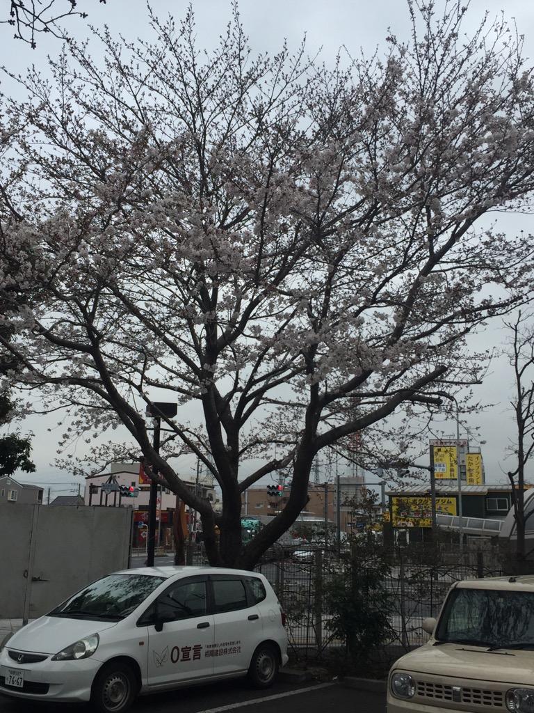 相模原・町田・八王子で自然素材の健康住宅を提供する相陽建設の桜①