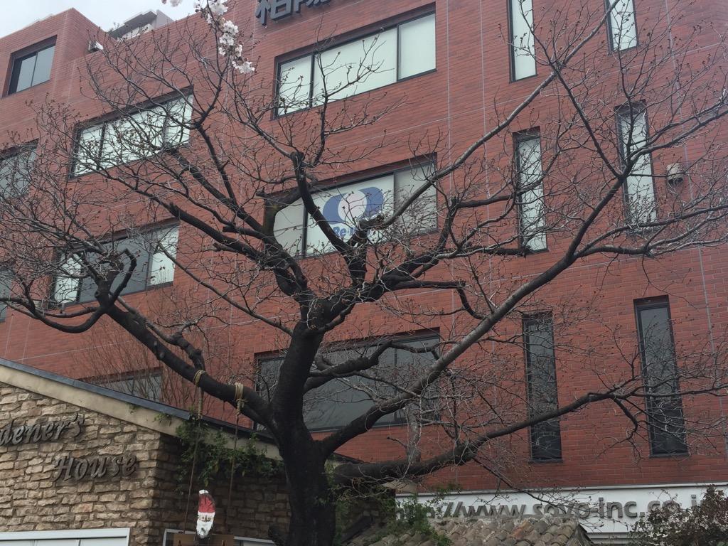相模原・町田・八王子で自然素材の健康住宅を提供する相陽建設の桜②