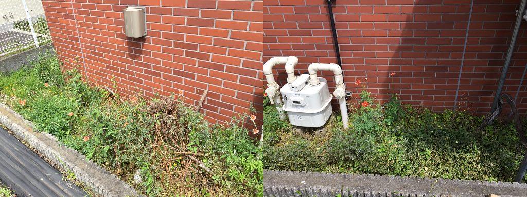 相模原・町田・八王子で自然素材の健康住宅を提供する相陽建設、本社周辺に雑草が繁っています