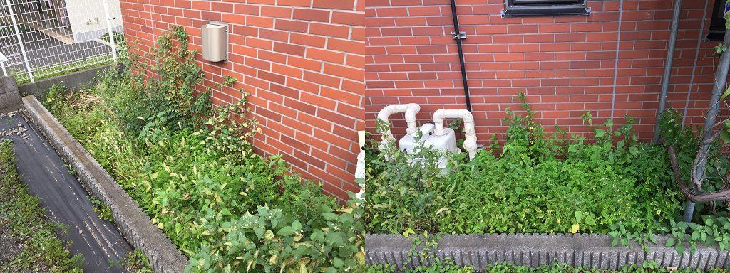相模原・町田・八王子で自然素材の健康住宅を提供する相陽建設、雑草の生命力に感嘆しています