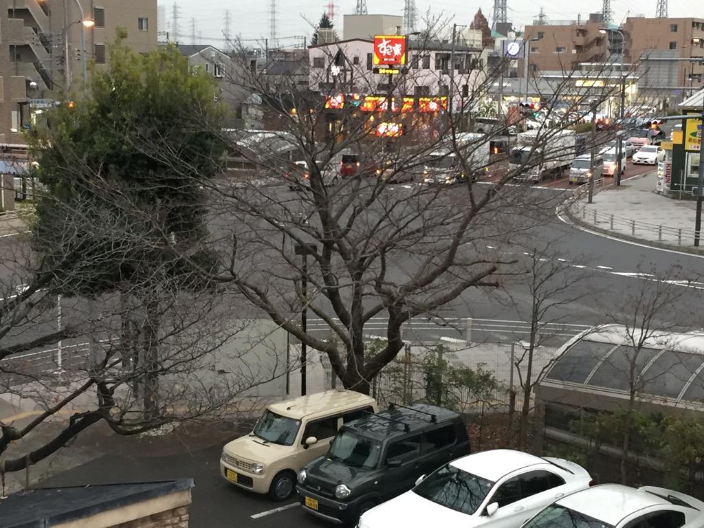 相模原市で自然素材の健康住宅を提供する相陽建設の桜の木、冬に入り見事に禿げました