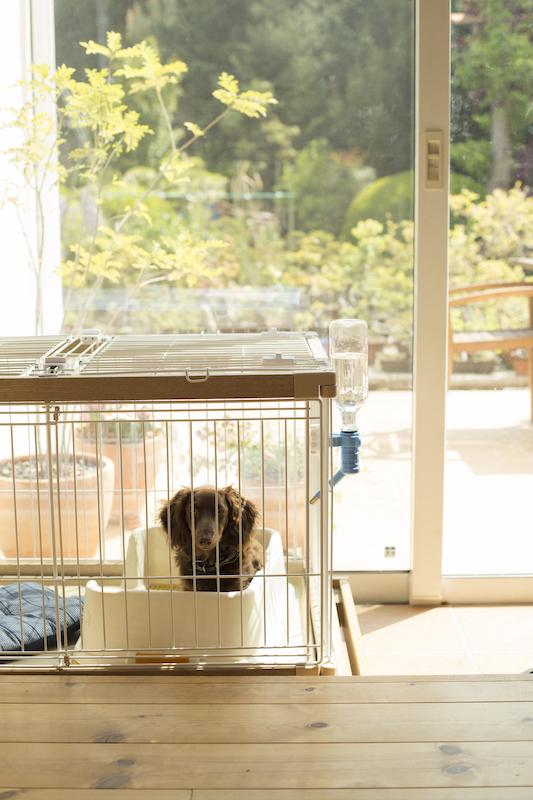 ゲージに入った愛犬