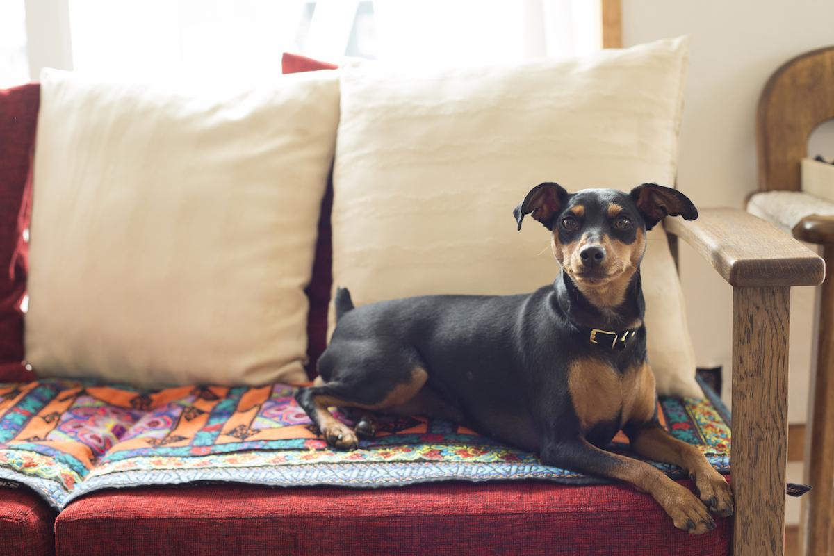ベッドに座る愛犬