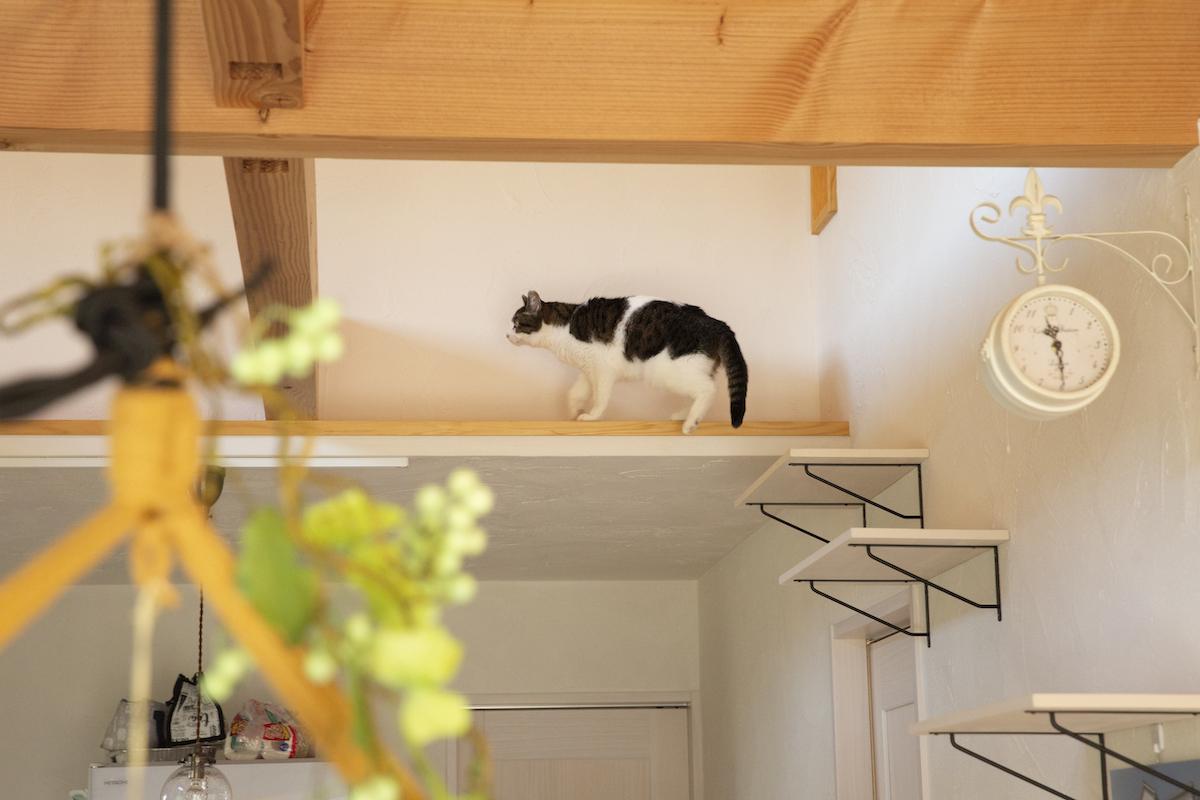 猫専用の廊下を歩く愛猫